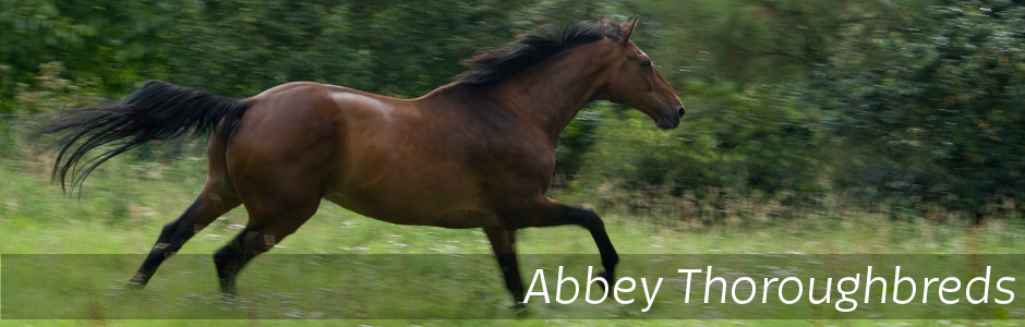 Abbey Thoroughbreds Horse Spelling