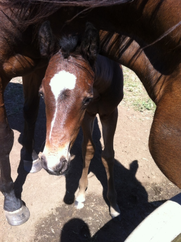 Dane Shadow Beautiful Romance colt